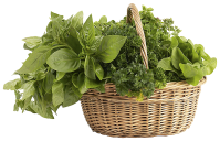 basket_of_herbs.png